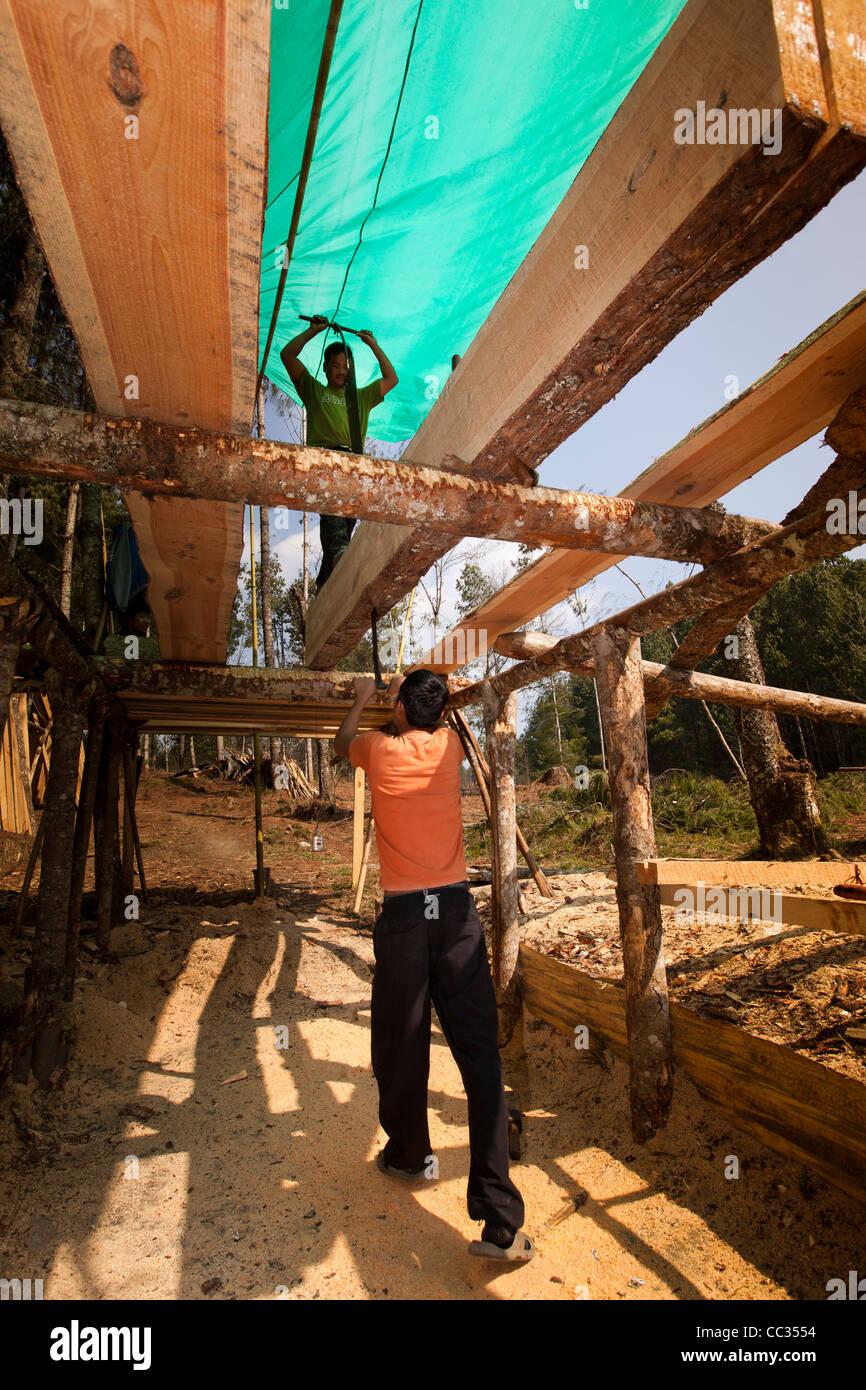 La India, Arunachal Pradesh, Ziro Valle, silvicultura, dos hombres serrando log a mano en los tablones con dos manos Imagen De Stock
