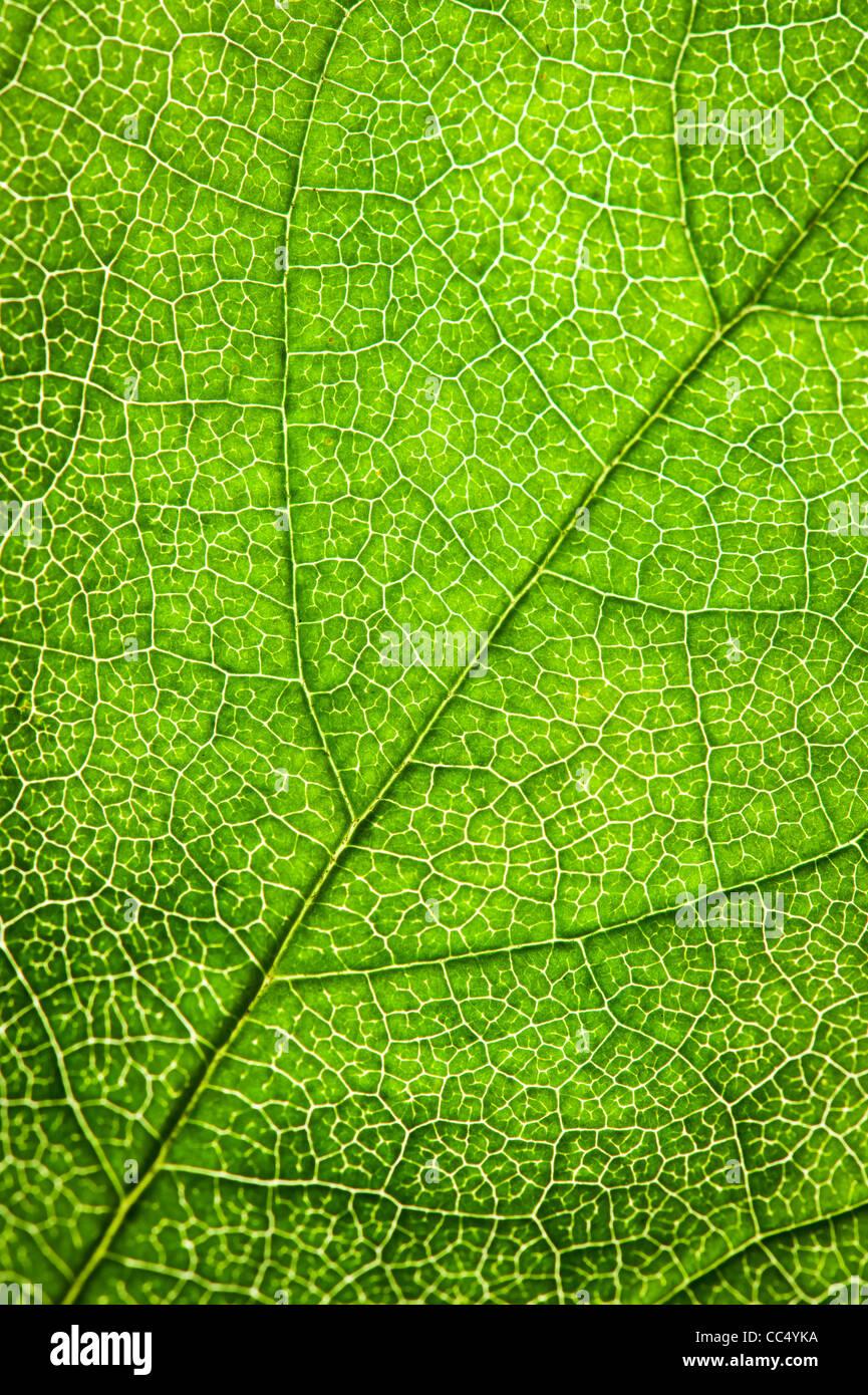 Textura de hoja verde Imagen De Stock
