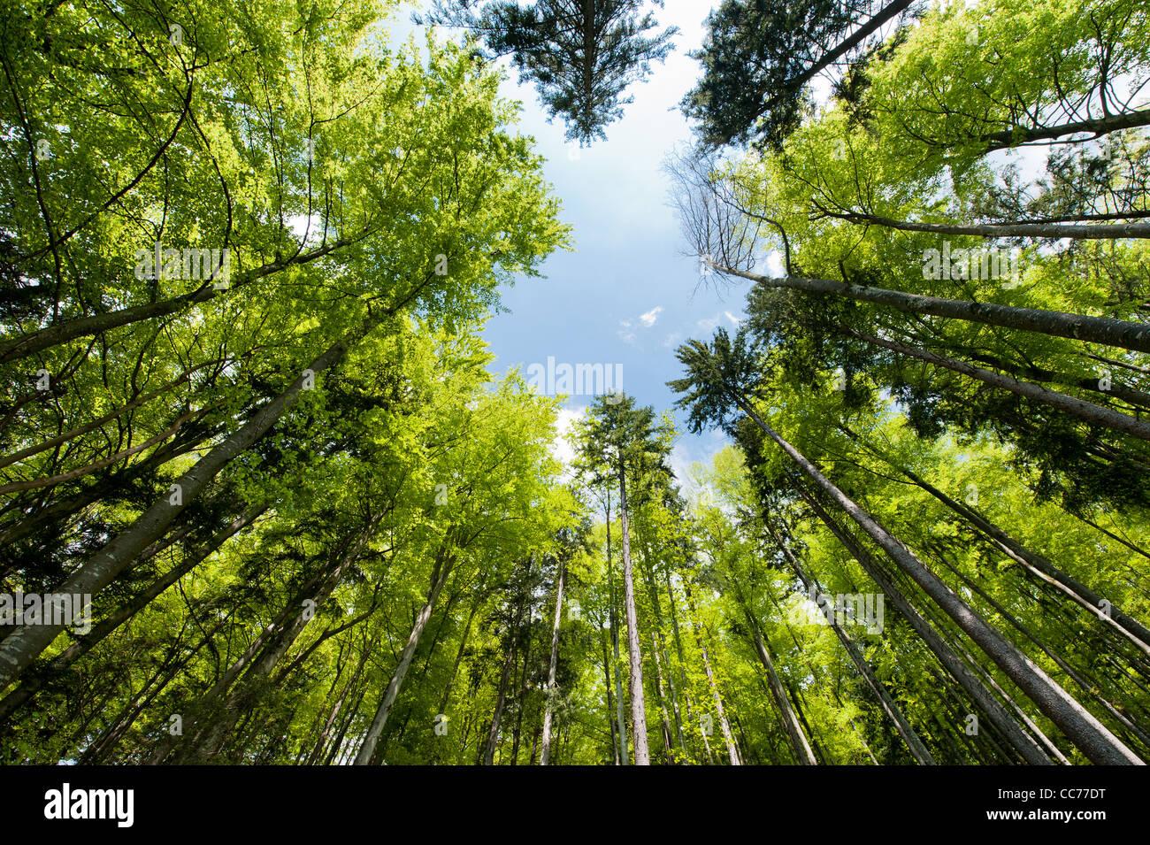 Amplio ángulo de visión de un colorido bosque de primavera Imagen De Stock