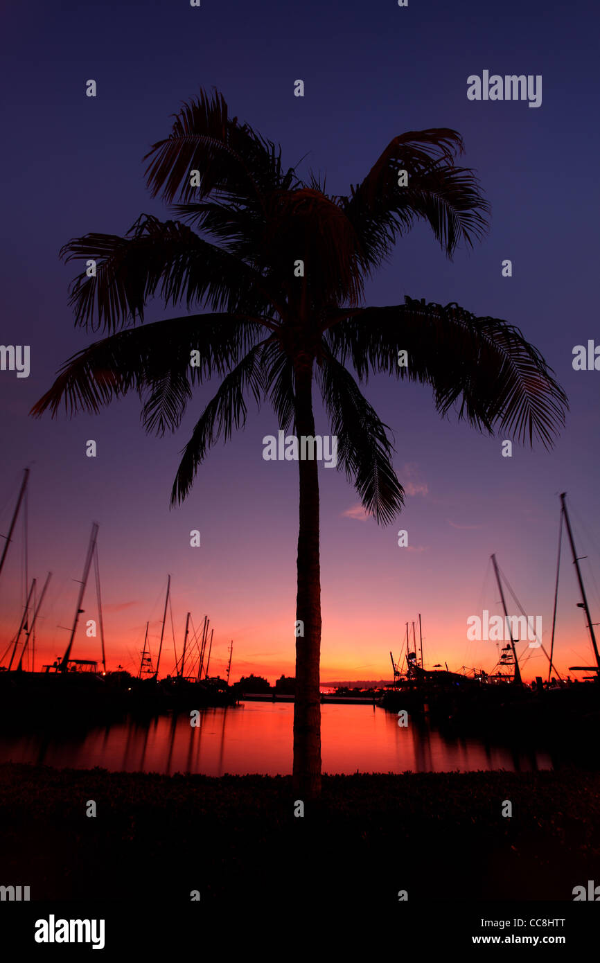 Miami Palmera silueta al atardecer Imagen De Stock
