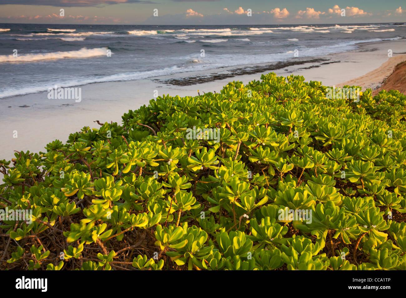 Nukolii Beach, también conocido como cocinas, Playa de Kauai, Hawaii. Foto de stock