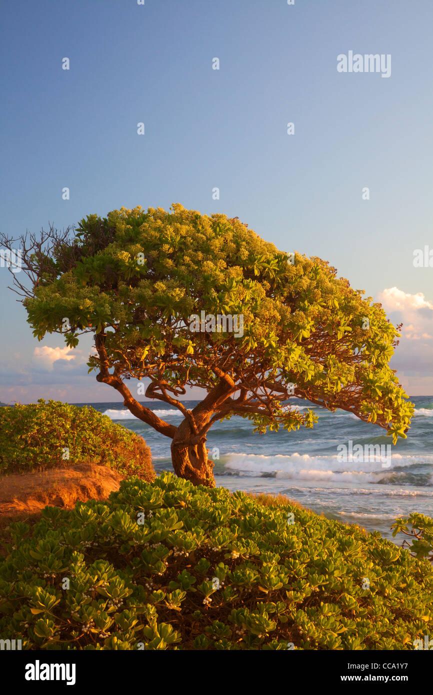 Nukoli'i Beach, también conocido como cocinas, Playa de Kauai, Hawaii. Foto de stock