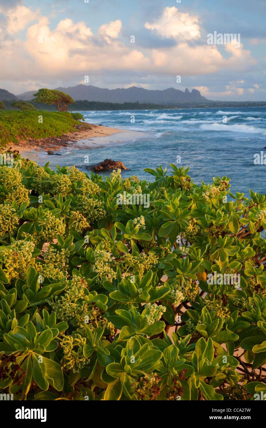 Nukoli'i Beach, también conocida como playa de cocinas, Lihu'e de Kauai, Hawaii. Foto de stock