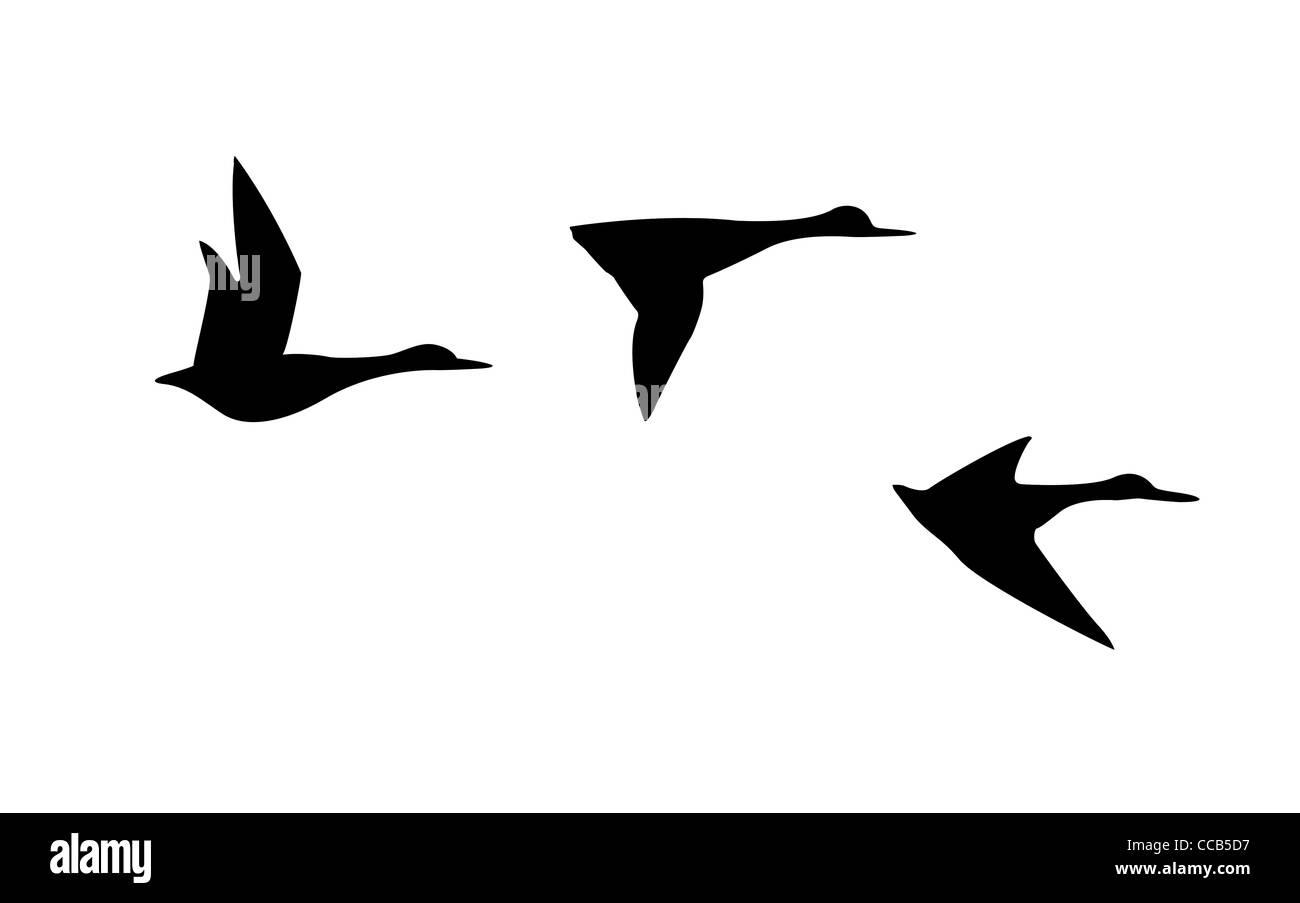 Patos Para Colorear Para Para Con Para Vector Stock Sin: Drawing Duck Imágenes De Stock & Drawing Duck Fotos De