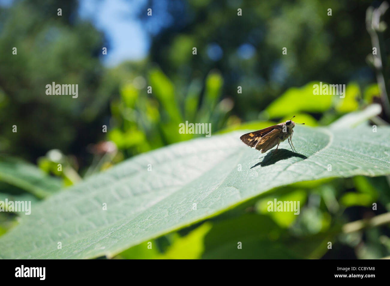 Descansando en la planta de mariposa Foto de stock
