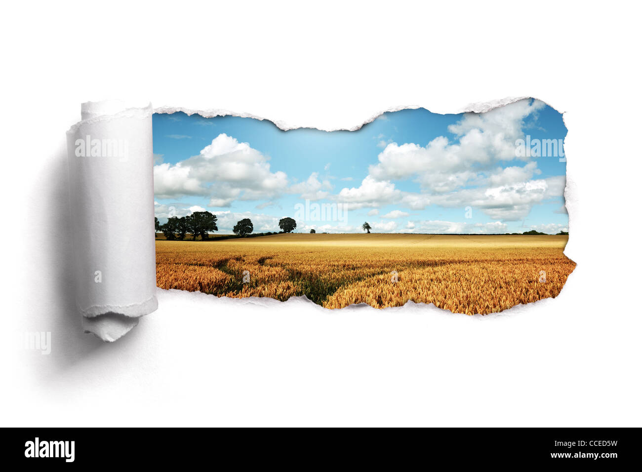 Trozos de papel a través de un paisaje de campo de trigo de verano Imagen De Stock