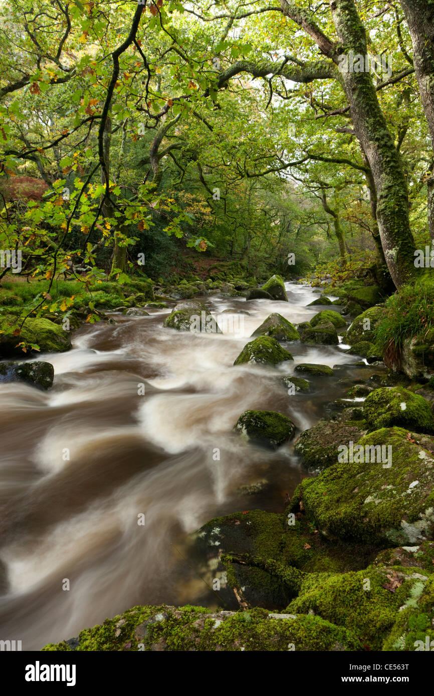 Dewerstone Plym río que fluye a través de la madera, Dartmoor, Devon, Inglaterra. Otoño (octubre Imagen De Stock