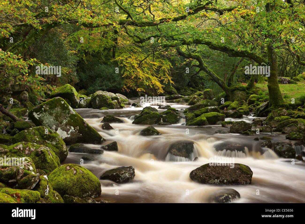 Río Plym hunde rocas cubiertas de musgo pasadas en su curso a través de la madera, Dewerstone Dartmoor, Imagen De Stock