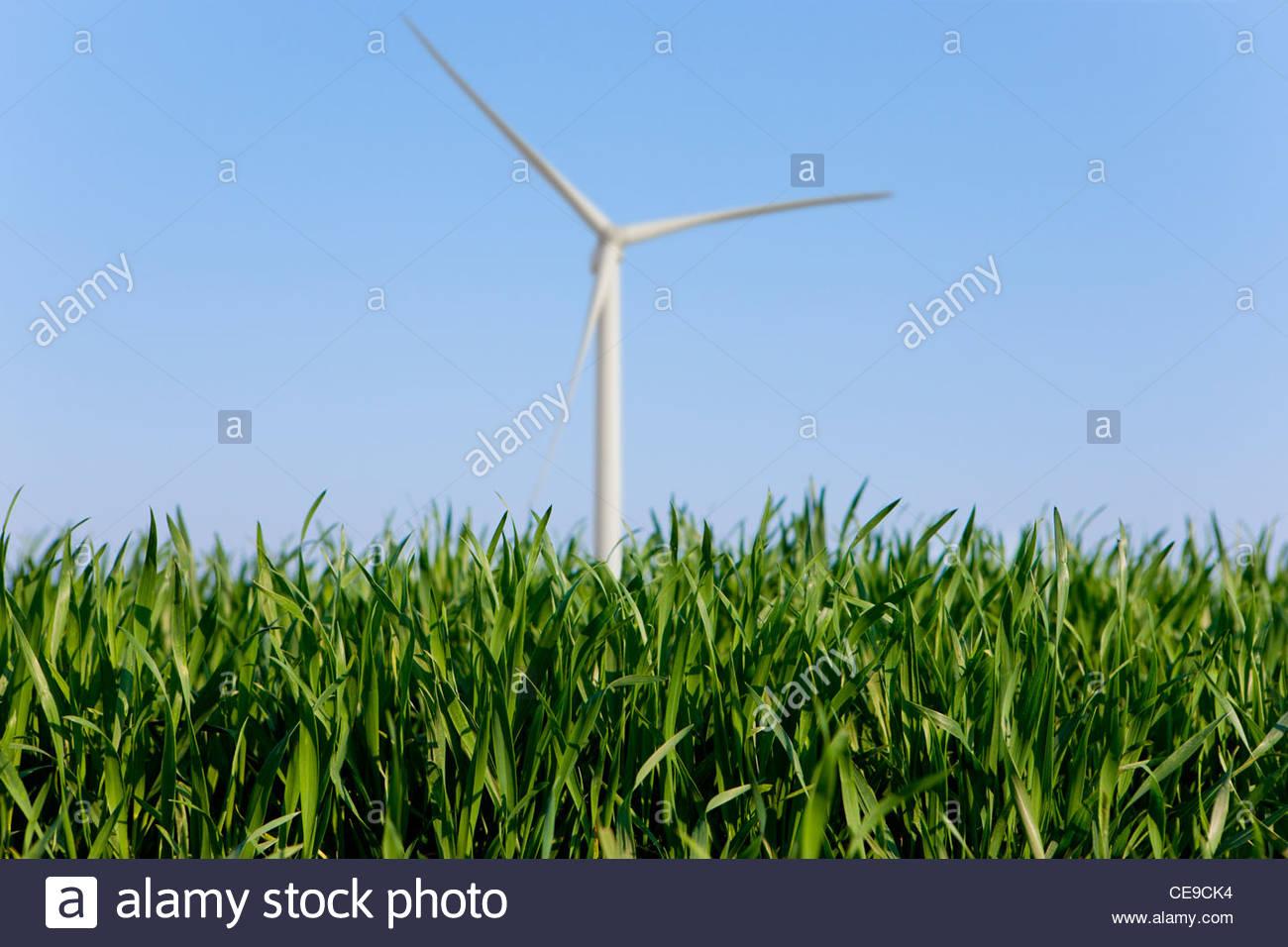 Cerca de hierba con turbina de viento en segundo plano. Imagen De Stock