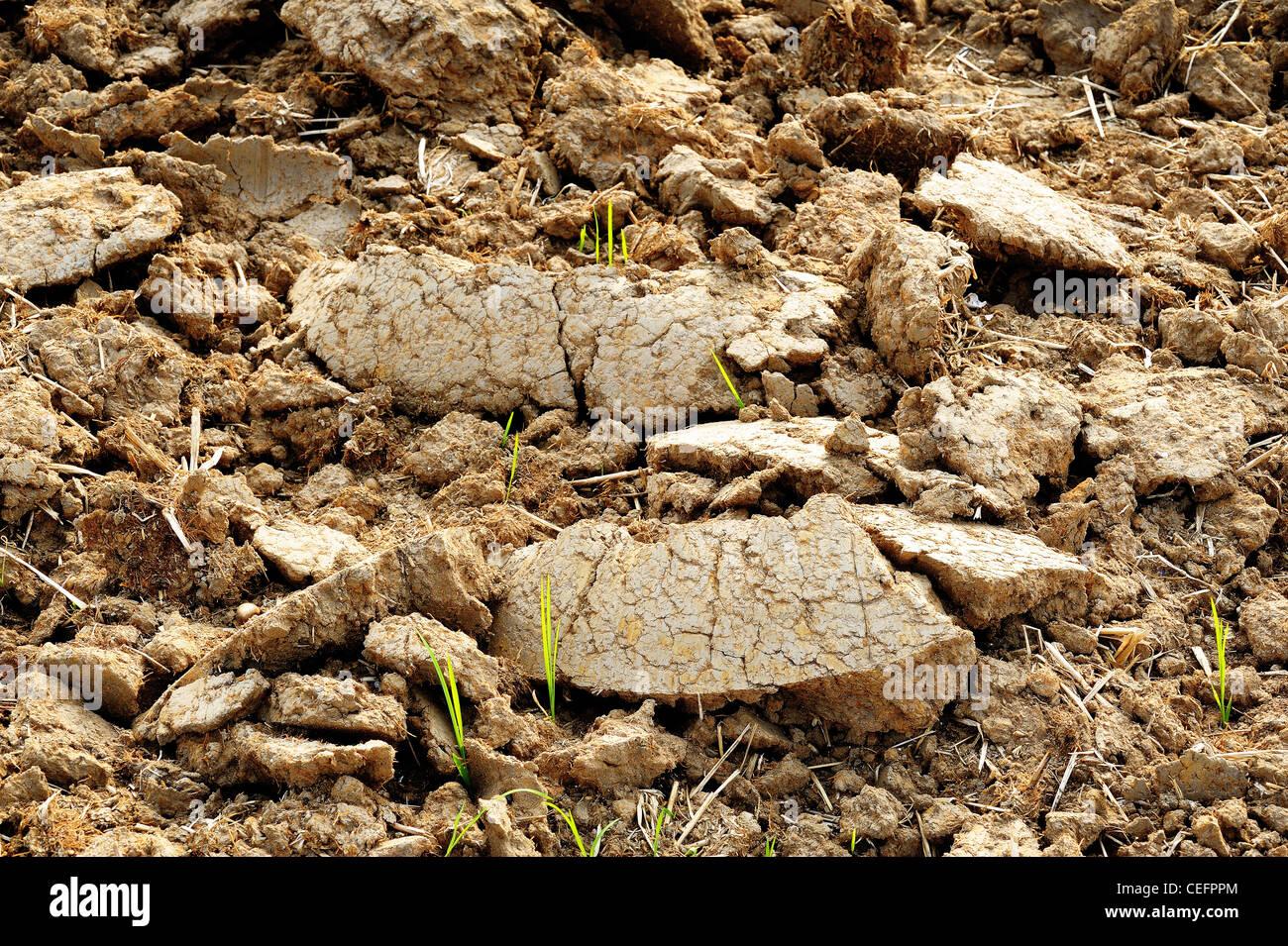 Tierra marrón de un campo agrícola Imagen De Stock