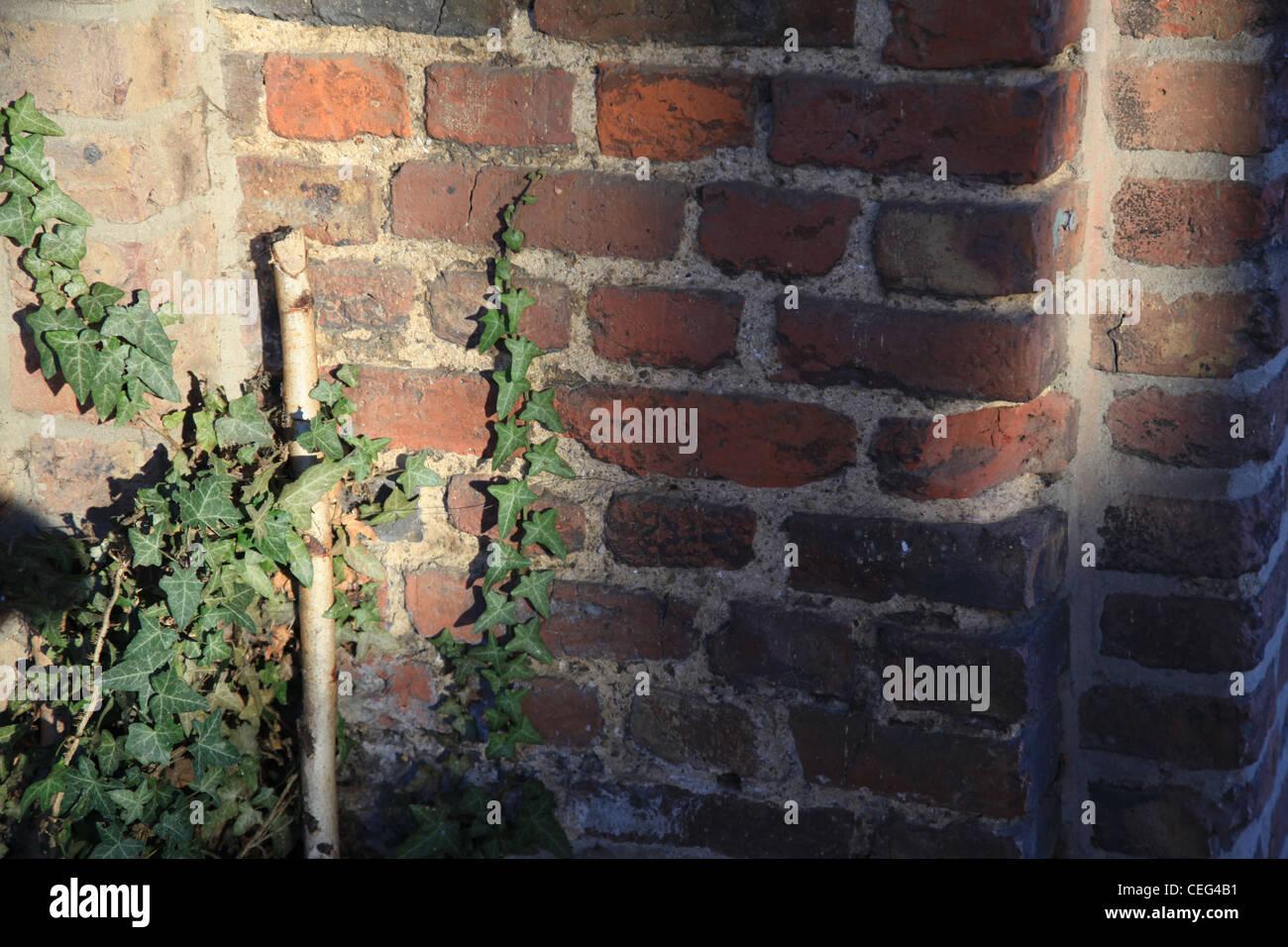 Antike Mauer in der Sonne mit Efeu, un antiguo muro en el sol con ivy, Klinker, Schatten, sombra positiv, Braun, Imagen De Stock