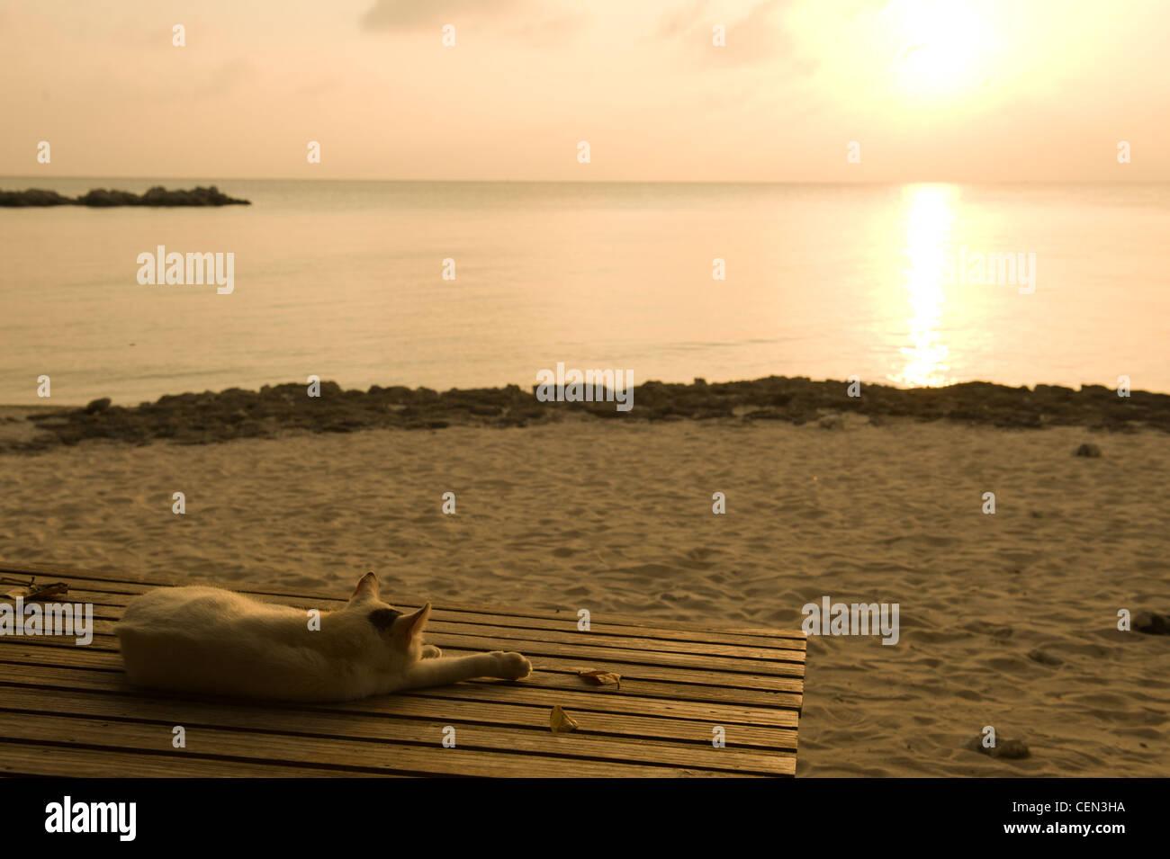 Gato durmiendo en la playa Foto de stock