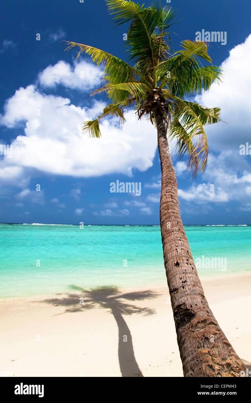 Tronco de palmera y summer view Imagen De Stock