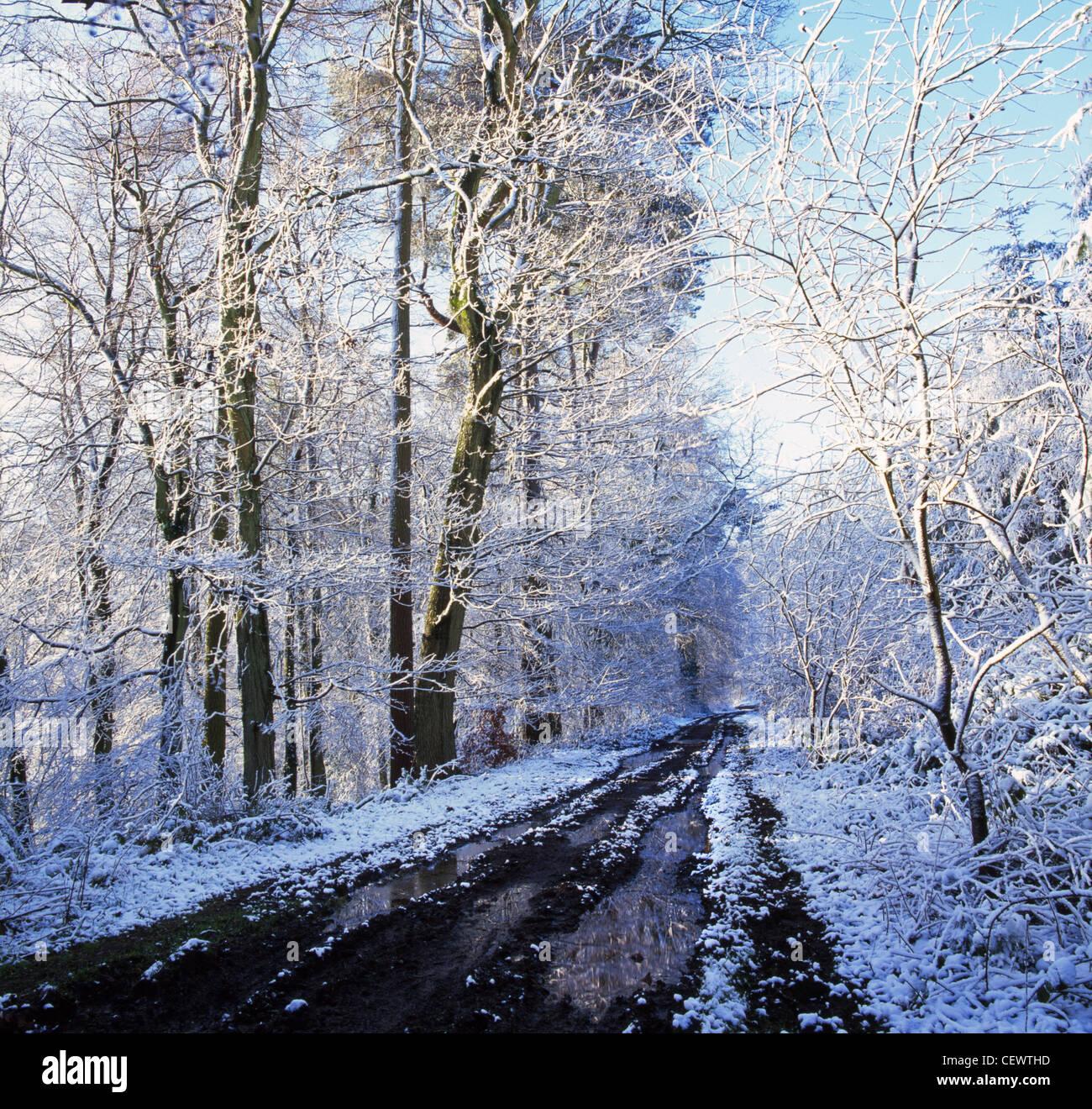 Bosque nevado cerca de Trellech. Ahora es simplemente un sueño Hamlet, Trellech fue una de las ciudades más Imagen De Stock