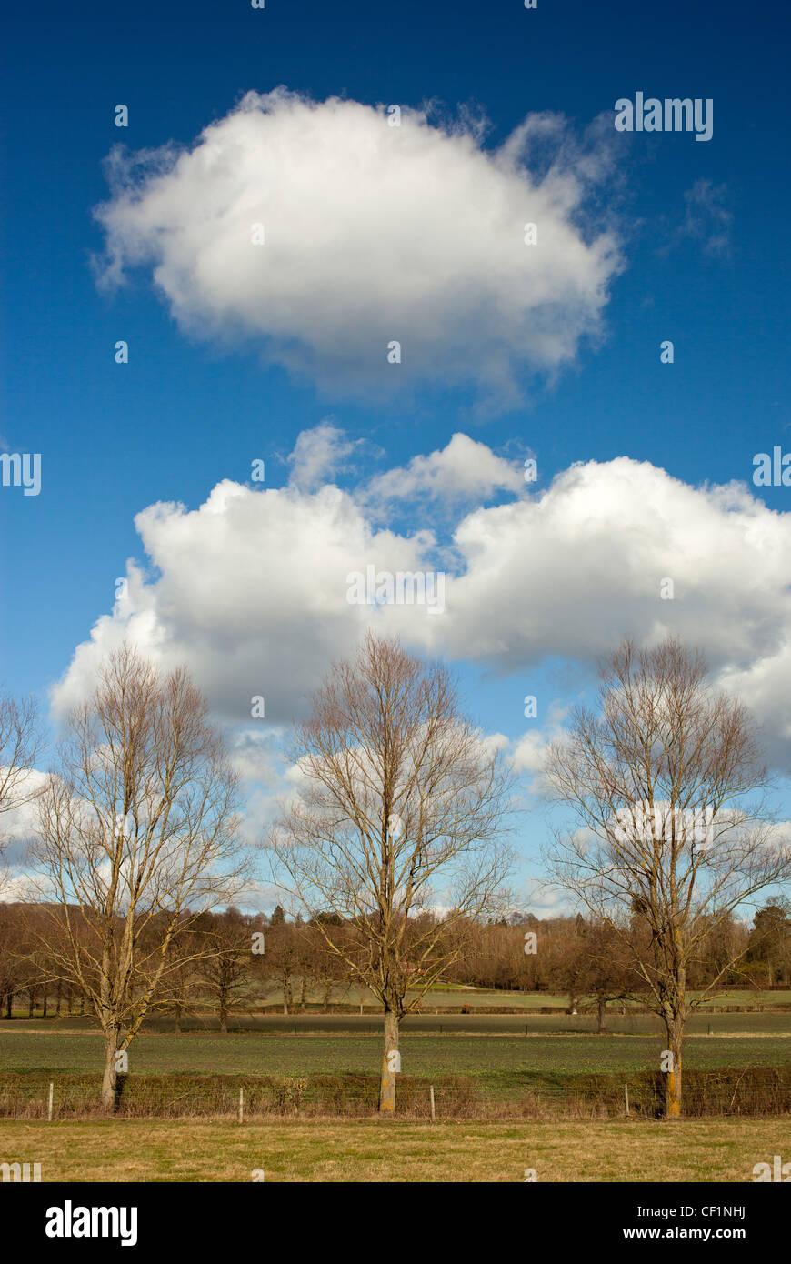 Modo Greensand. Chorlitejo paisaje en invierno. Foto de stock