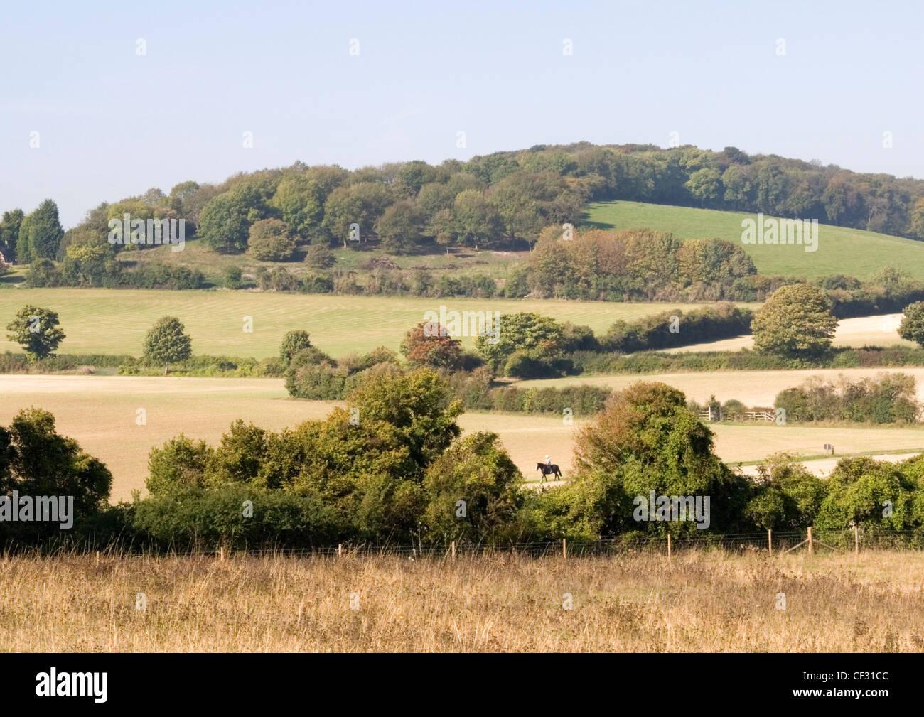 Colinas de Chiltern - nr Bledlow Ridge - boscosas laderas - hedgerows - prados - jinete enmarcado por árboles Imagen De Stock