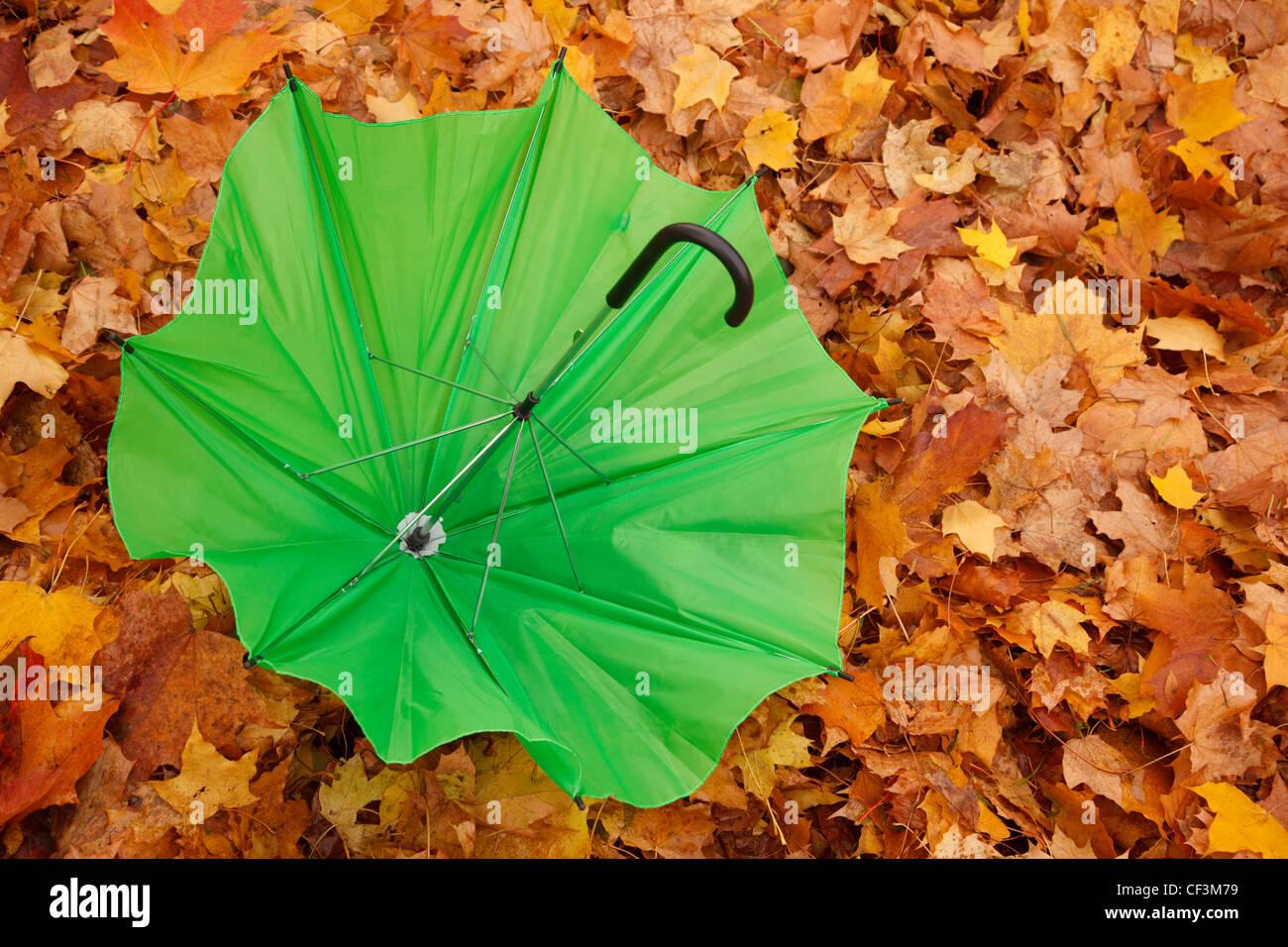 Verde paraguas abierto reside en contra de otoño hojas amarillas. Formato horizontal. Imagen De Stock