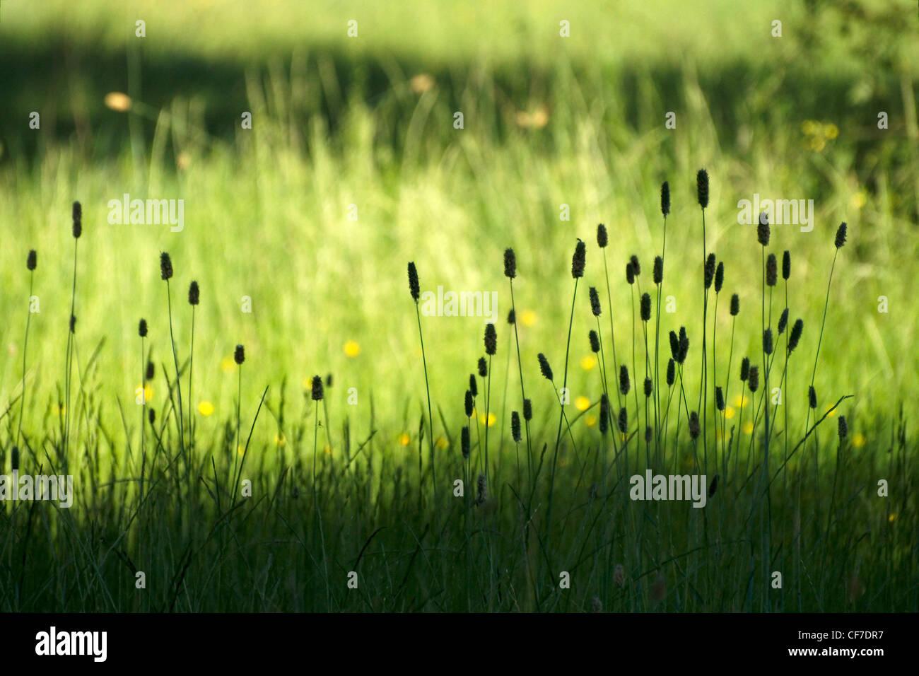 La hierba en los pastos en el norte de Portugal Imagen De Stock