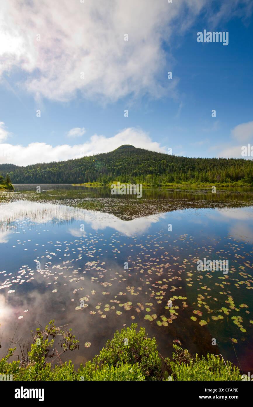 En la época de primavera en el estanque cerca de Colbert's Cove, Newfoundland y Labrador, Canadá. Imagen De Stock