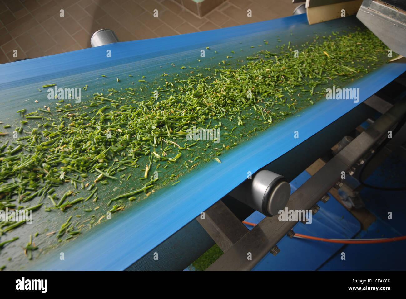Alpine, cinta transportadora, hierbas, biología, Weissenburg, hierbas de montaña, procesamiento, reparadoras, Imagen De Stock