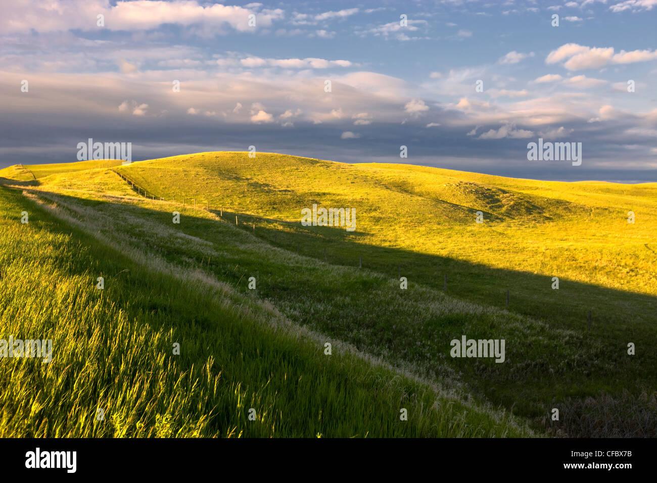 Campos en tiempo de primavera, de Basildon, Saskatchewan, Canadá. Imagen De Stock
