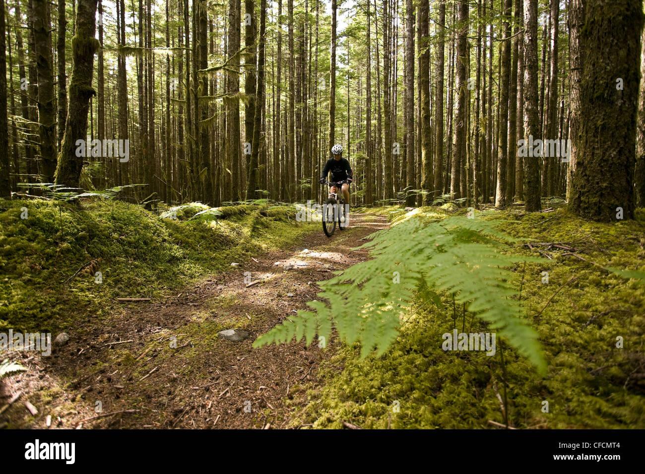 Mountain bike rider recorre el registro antiguo Imagen De Stock