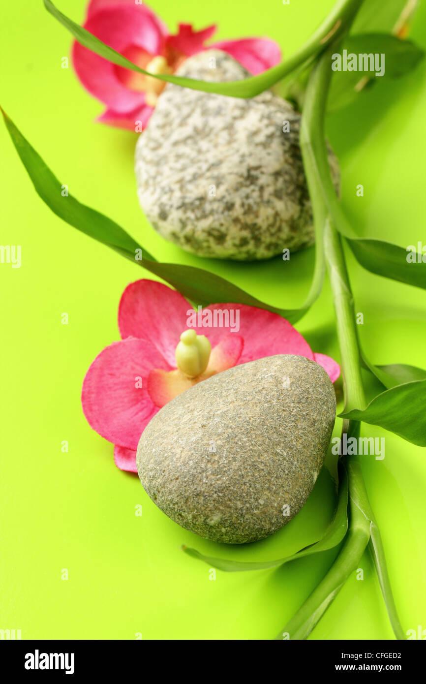 Spa Orchids Imágenes De Stock & Spa Orchids Fotos De Stock - Alamy