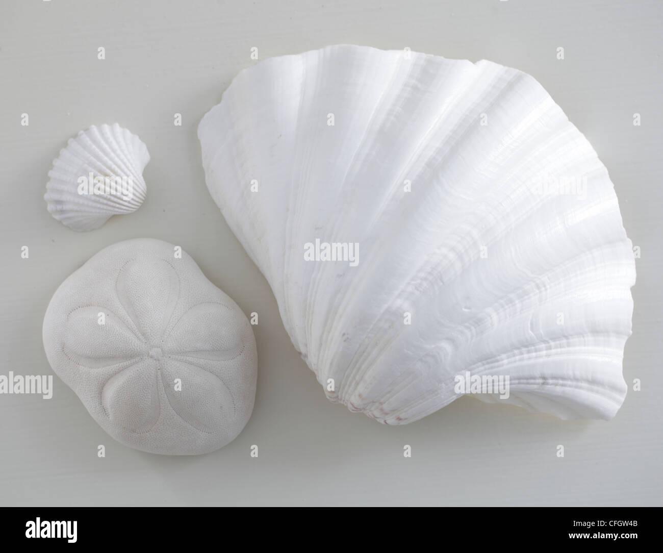 Conchas: Todavía la vida costera Imagen De Stock