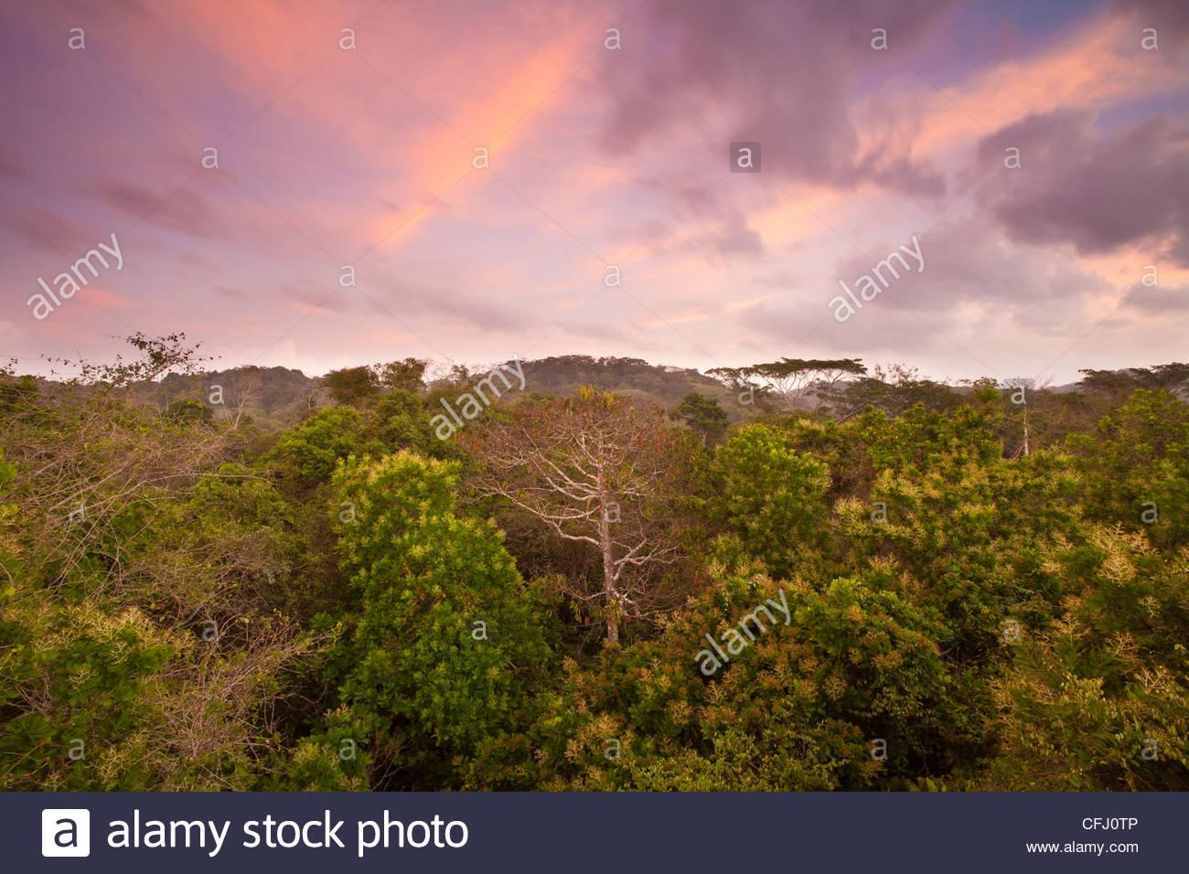 Amanecer en la selva del Parque nacional Soberanía, República de Panamá. Imagen De Stock