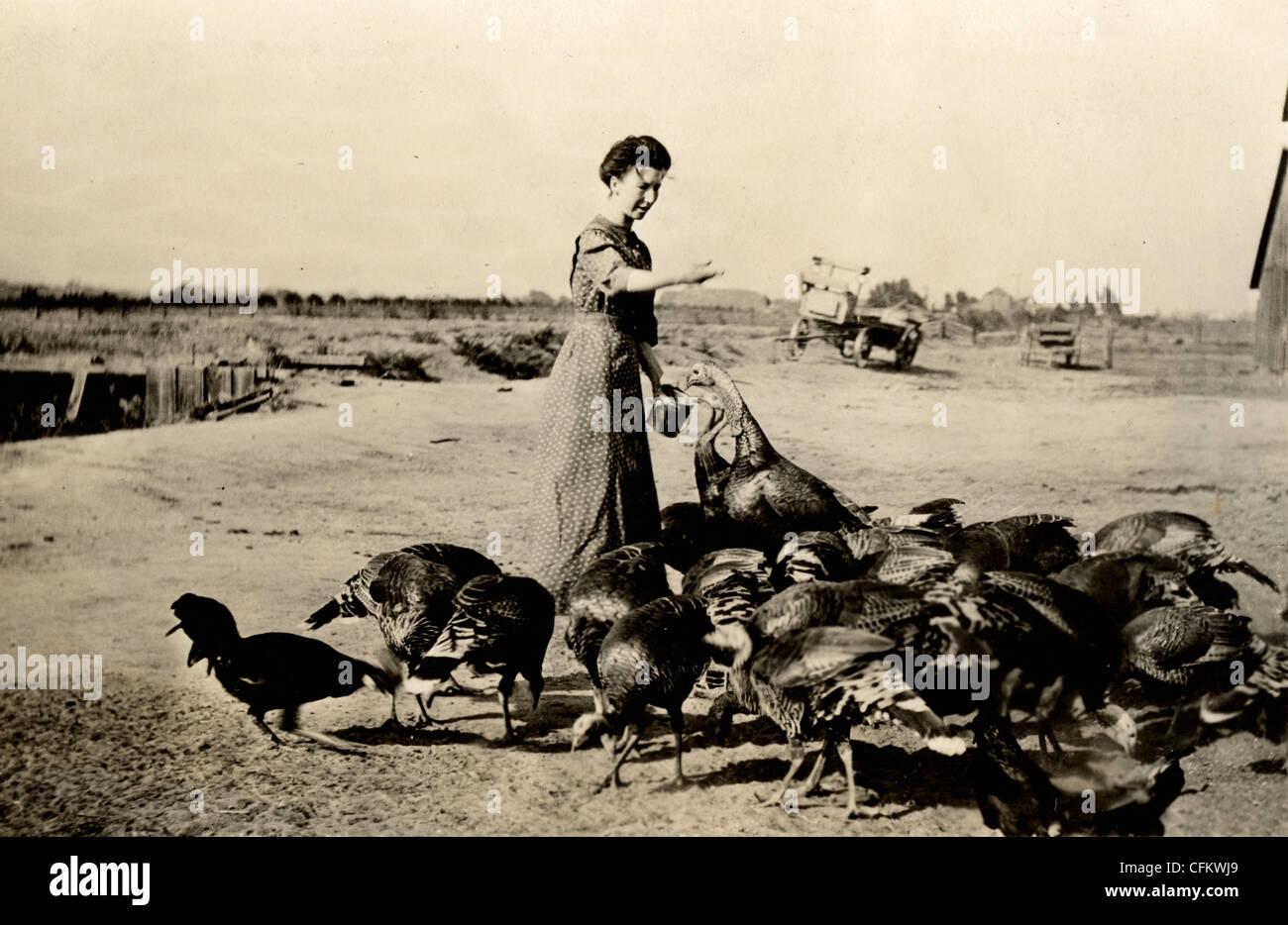 La esposa del agricultor Alimentar a Turquía Grey Imagen De Stock