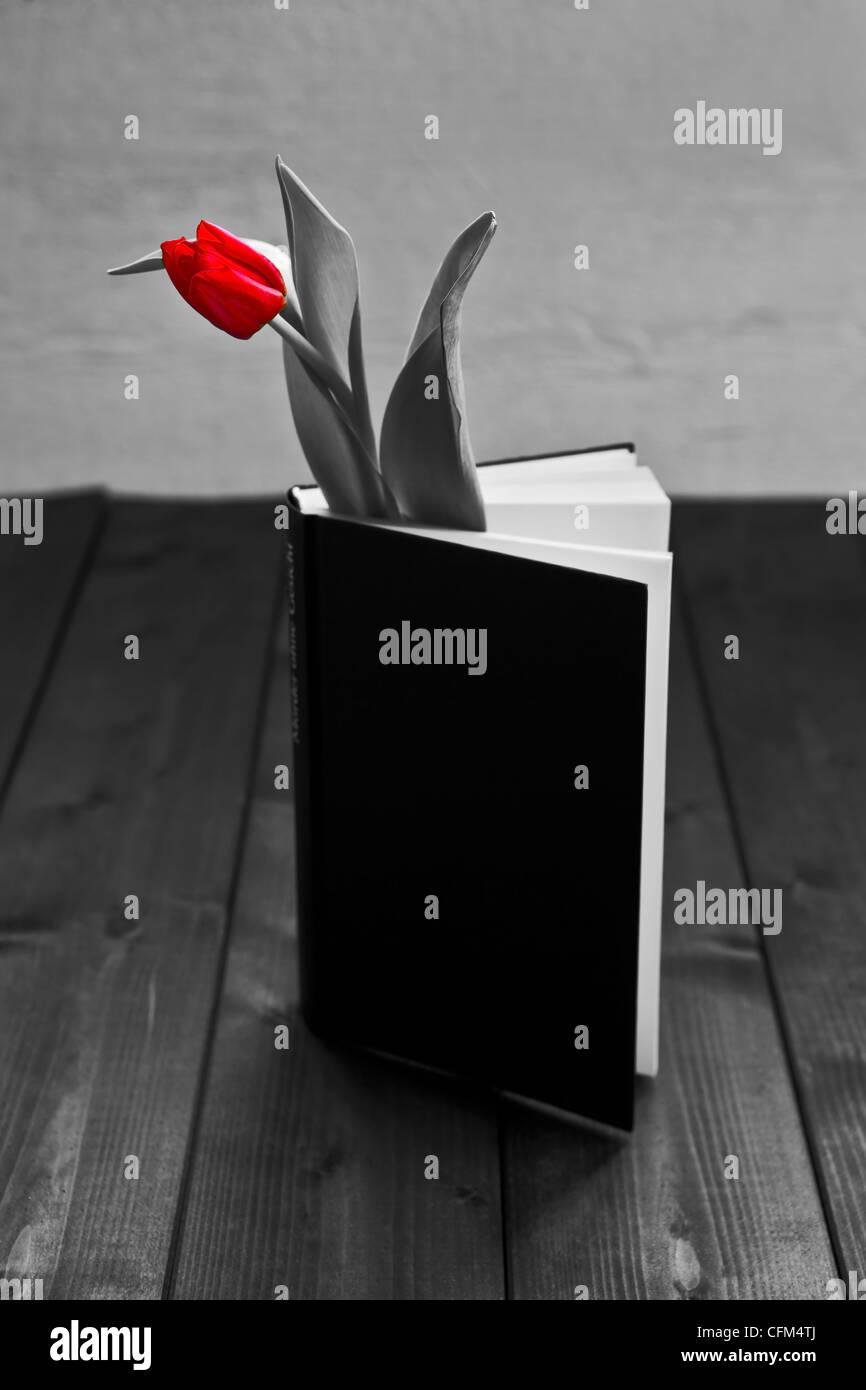 Un tulipán en un libro Imagen De Stock
