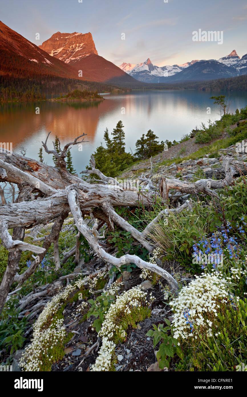 Montaña estrellas polvorientas, Montana, Estados Unidos de América, América del Norte Imagen De Stock