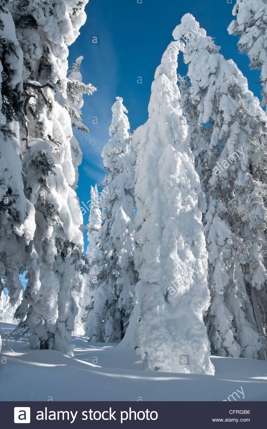 Helada Hoar árboles cubiertos de nieve en dos Top Mountain, West Yellowstone, Montana, Estados Unidos de América, Imagen De Stock