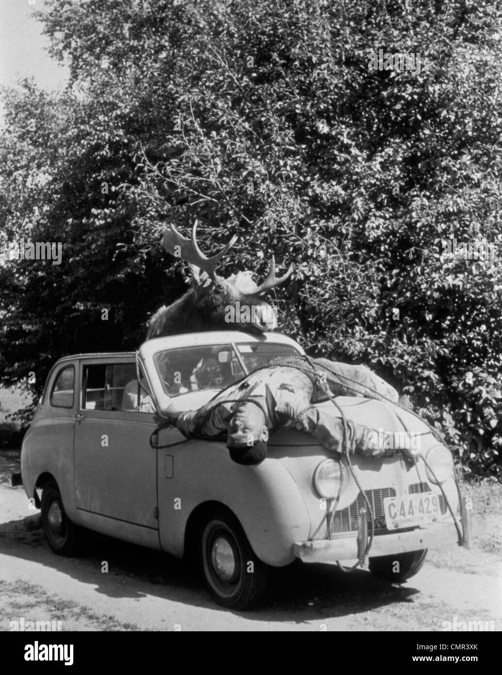1940 1950 MOOSE EN COCHE CON EL HOMBRE ATADO Atado al capó Foto de stock