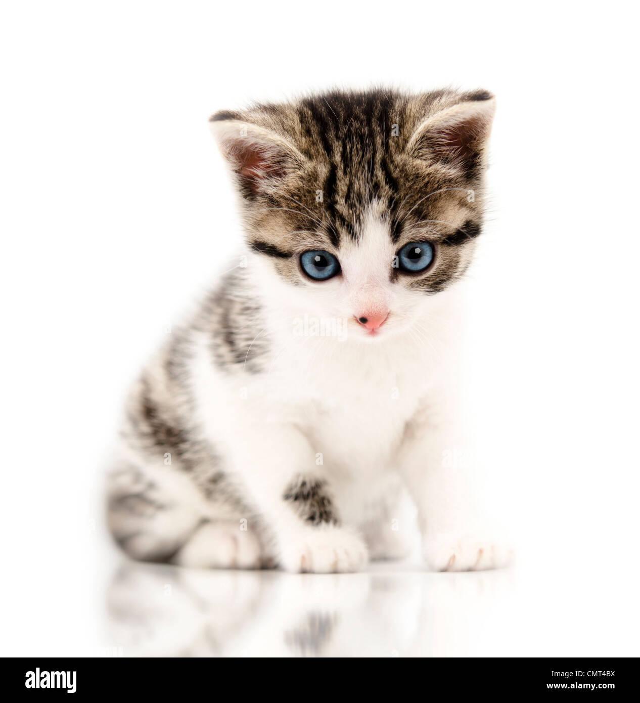 Pequeño gatito en un gracioso plantean Imagen De Stock