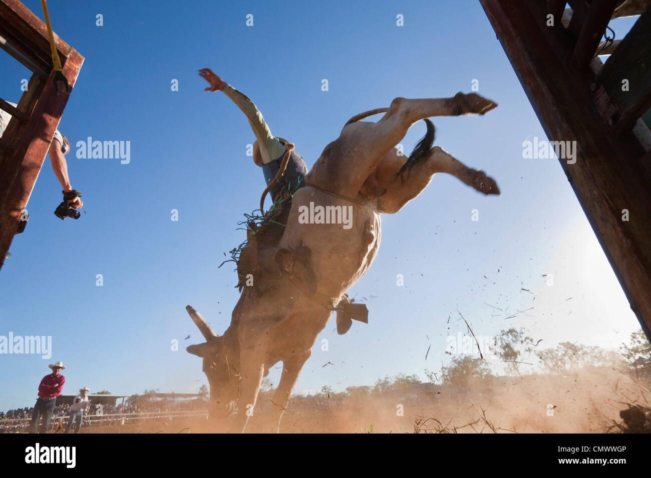 Ángulo de visión baja de jinete entrando en arena. Mt Granate Rodeo, Mt granate, Queensland, Australia Imagen De Stock