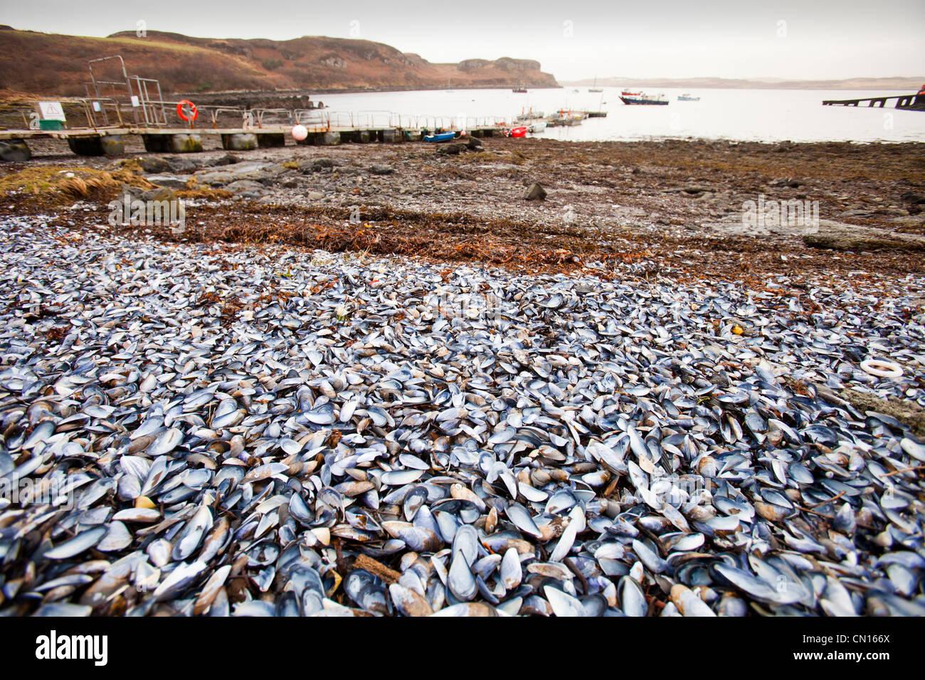 Portnalong conchas en la playa, en la Isla de Skye, Escocia, Reino Unido. Foto de stock
