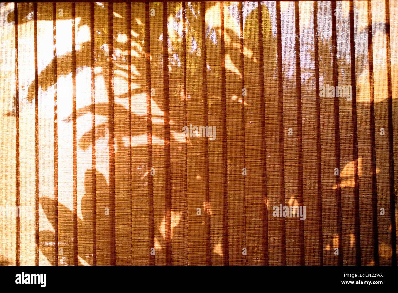 Palm Tree sombras vistos a través de las persianas de la ventana Foto de stock