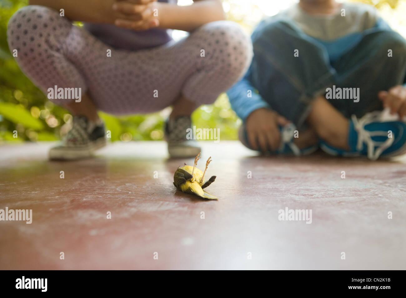 Dos niños mirando pájaro muerto Foto de stock