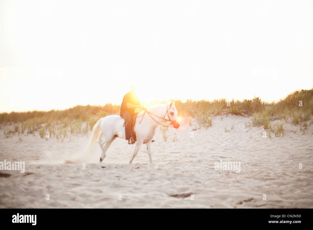 Persona a caballo en la playa Foto de stock