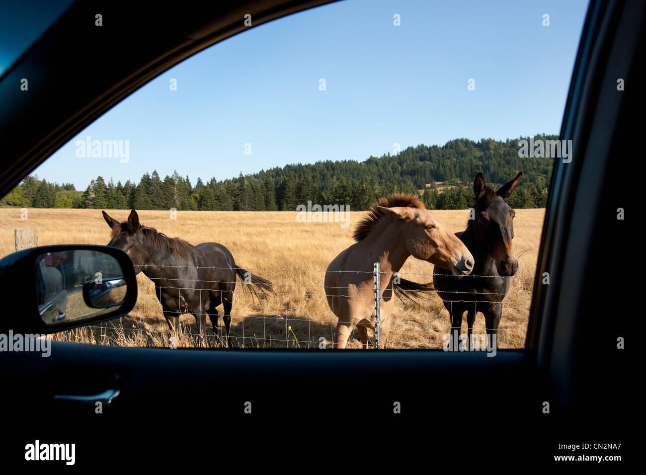 Caballos vistos a través de ventanilla Imagen De Stock