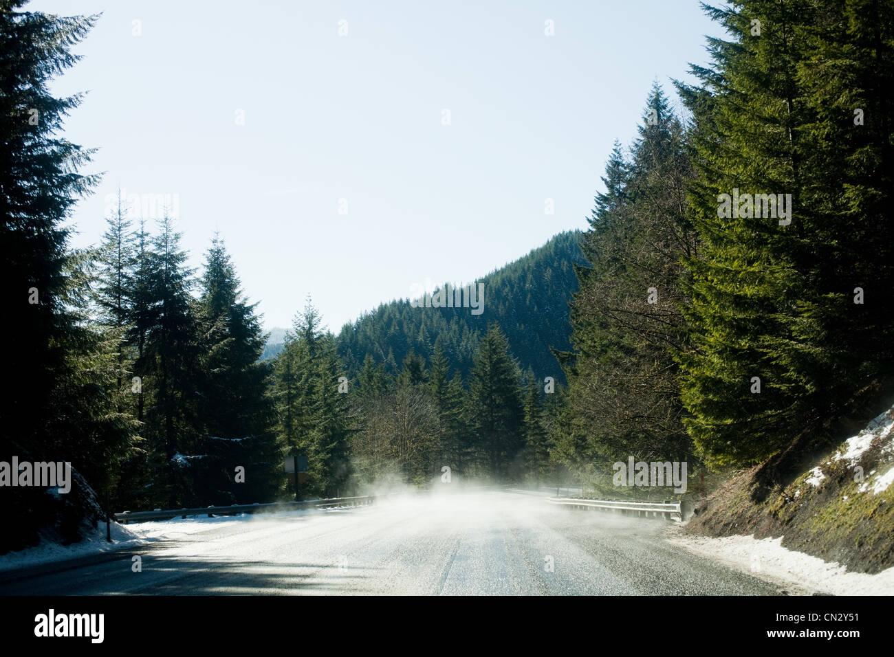 Camino en un bosque vacío Imagen De Stock