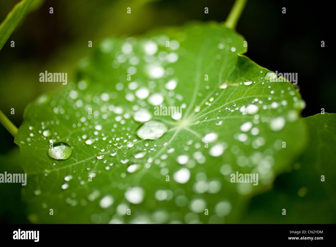 Las gotas de agua en la hoja Imagen De Stock