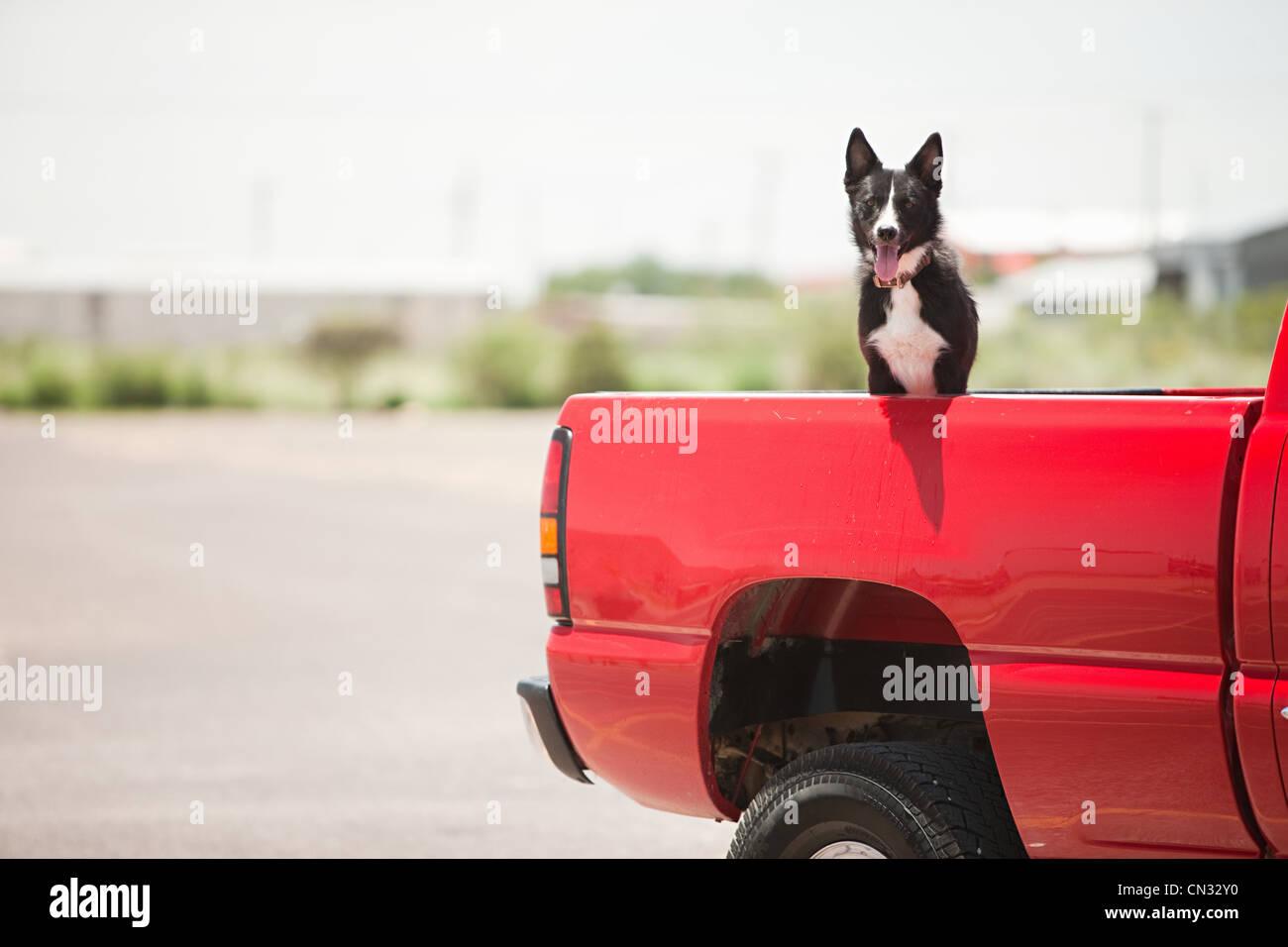 Perro en camión rojo Imagen De Stock