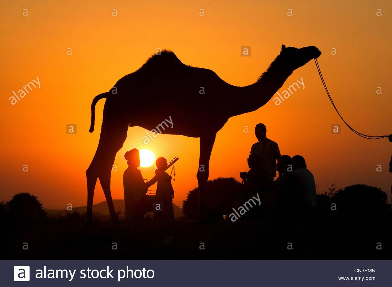 Siluetas de dromedario camello y comerciantes, Feria de camellos de Pushkar, Rajastán, India Imagen De Stock
