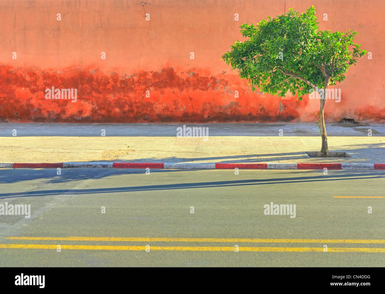Lone Tree creciente sobre la acera por carretera vacía Imagen De Stock