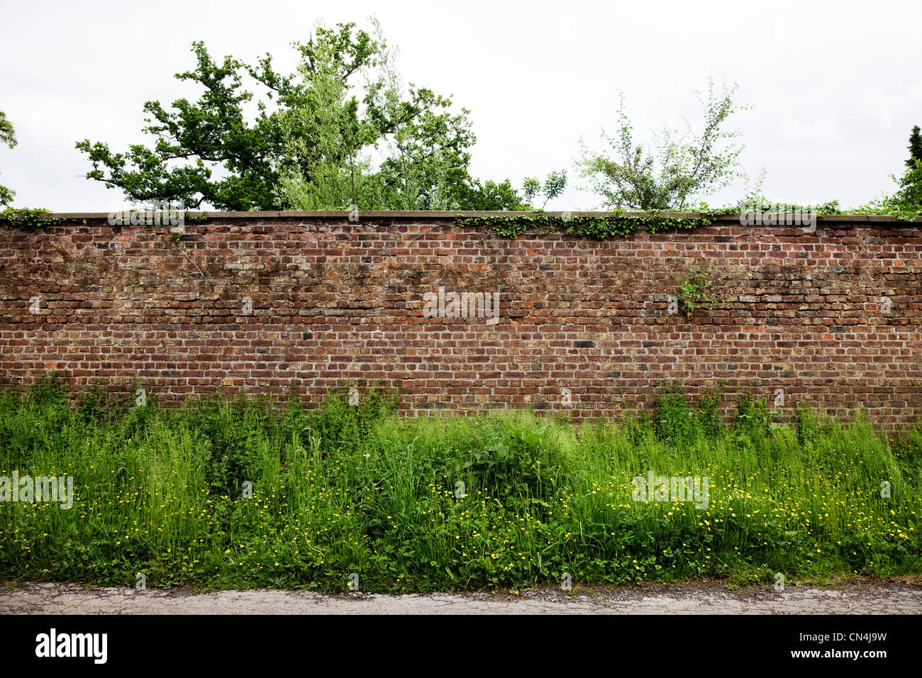 Pared de ladrillo y plantas Imagen De Stock