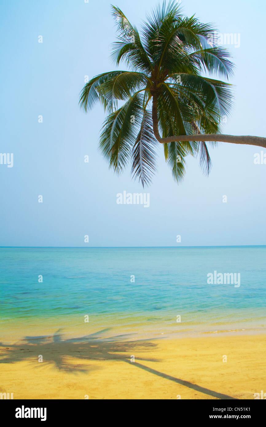 Una palmera se inclina sobre una playa de arena dorada . Un tranquilo mar turquesa suave bajo un cielo despejado en la isla tailandesa de Koh Samui' Foto de stock