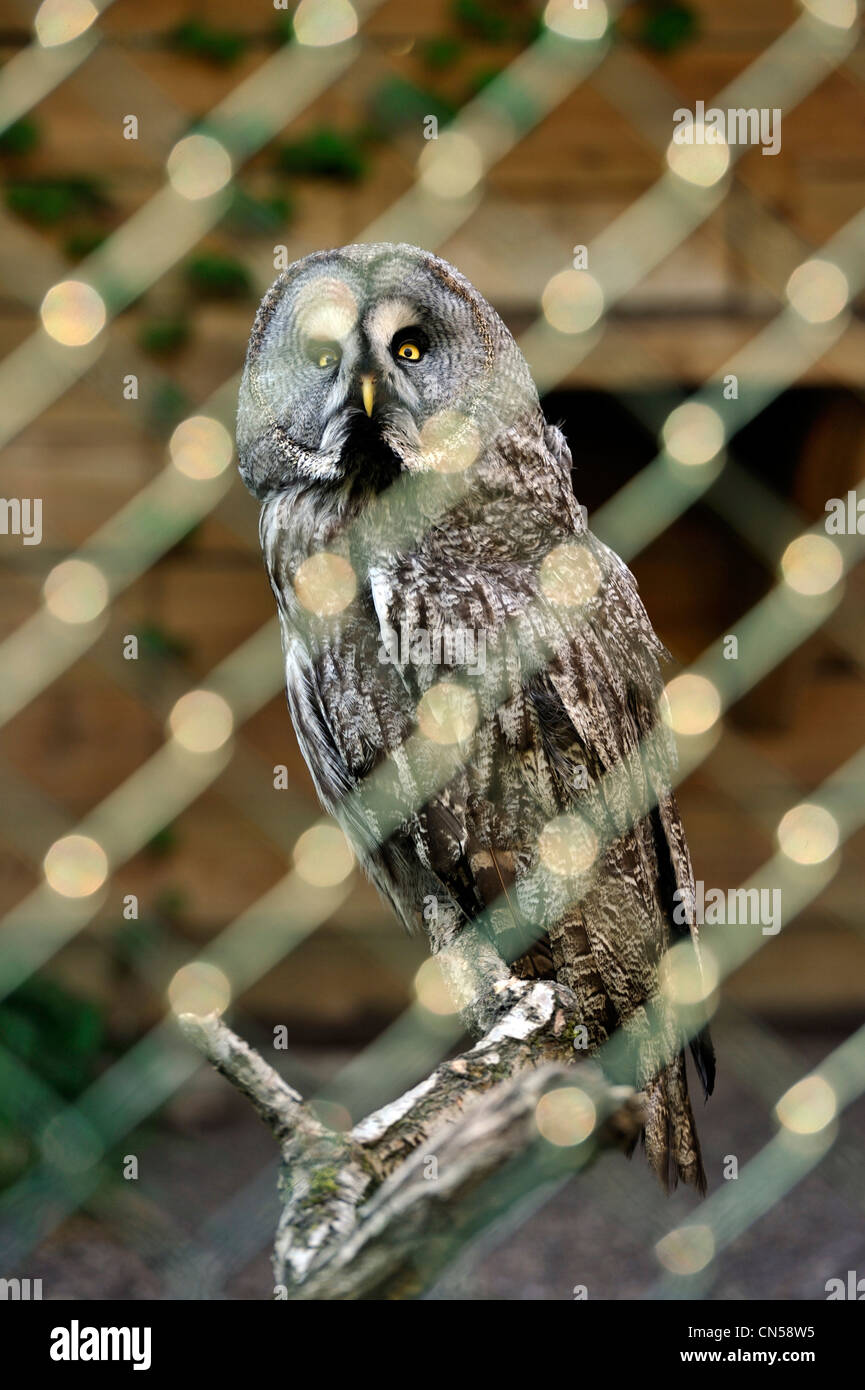 Francia, Moselle, Amneville les Thermes Zoo, Owl Imagen De Stock