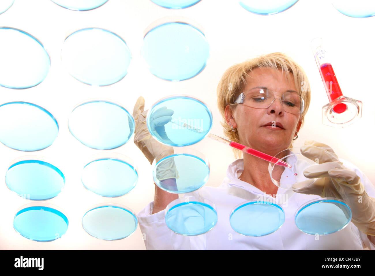 Técnico de laboratorio trabajando en el laboratorio con cultivos de bacterias en placas de Petri. Visto a través Imagen De Stock